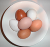bowl of eggsw.png